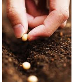 cerita motivasi sekantong bibit kacang tanah