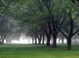 Puisi Alam Tentang keindahan Pohon